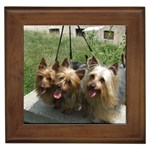 Silky Terrier Gifts, Dog Merchandise, Custom Dog Gifts Ideas, Breed Information & Dog Photos