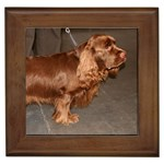 Sussex Spaniel Gifts, Dog Merchandise, Custom Dog Gifts Ideas, Breed Information & Dog Photos