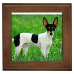Toy Fox Terrier Gifts, Dog Merchandise, Custom Dog Gifts Ideas, Breed Information & Dog Photos