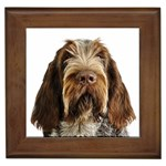 Spinone Italiano Gifts, Dog Merchandise, Custom Dog Gifts Ideas, Breed Information & Dog Photos