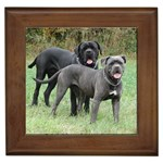 Cane Corso Gifts, Dog Merchandise, Custom Dog Gift Ideas, Breed Information & Dog Photos