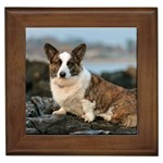 Cardigan Welsh Corgi Gifts, Dog Merchandise, Custom Dog Gift Ideas, Breed Information & Dog Photos