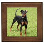 German Pinscher Gifts, Dog Merchandise, Custom Dog Gift Ideas, Breed Information & Dog Photos