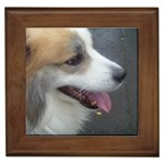 Icelandic Sheepdog Gifts, Dog Merchandise, Custom Dog Gift Ideas, Breed Information & Dog Photos