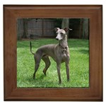Italian Greyhound Gifts, Dog Merchandise, Custom Dog Gift Ideas, Breed Information & Dog Photos