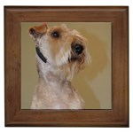 Lakeland Terrier Gifts, Dog Merchandise, Custom Dog Gift Ideas, Breed Information & Dog Photos