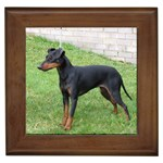 Manchester Terrier Gifts, Dog Merchandise, Custom Dog Gift Ideas, Breed Information & Dog Photos