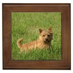 Norwich Terrier Gifts, Dog Merchandise, Custom Dog Gift Ideas, Breed Information & Dog Photos