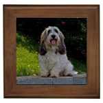 Petit Basset Griffon Gifts, Dog Merchandise, Custom Dog Gift Ideas, Breed Information & Dog Photos