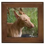 Pharaoh Hound Gifts, Dog Merchandise, Custom Dog Gift Ideas, Breed Information & Dog Photos