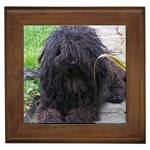 Puli Gifts, Dog Merchandise, Custom Dog Gift Ideas, Breed Information & Dog Photos
