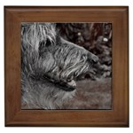 Scottish Deerhound Gifts, Dog Merchandise, Custom Dog Gift Ideas, Breed Information & Dog Photos