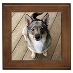 Swedish Vallhund Gifts, Dog Merchandise, Custom Dog Gifts Ideas, Breed Information & Dog Photos