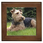 Welsh Terrier Gifts, Dog Merchandise, Custom Dog Gifts Ideas, Breed Information & Dog Photos