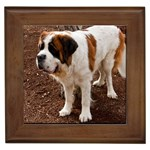 Saint Bernard Gifts, Dog Merchandise, Custom Dog Gift Ideas, Breed Information & Dog Photos