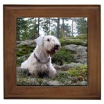 Sealyham Terrier Gifts, Dog Merchandise, Custom Dog Gift Ideas, Breed Information & Dog Photos